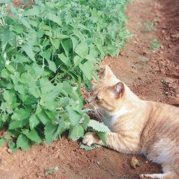 Cats in the Catnip