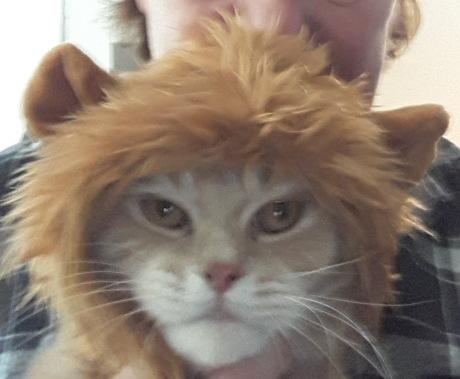 Weasley Lion Hat