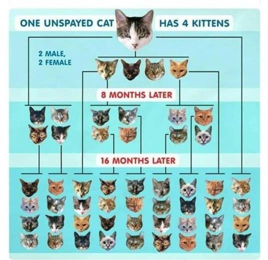 SPCA Poster