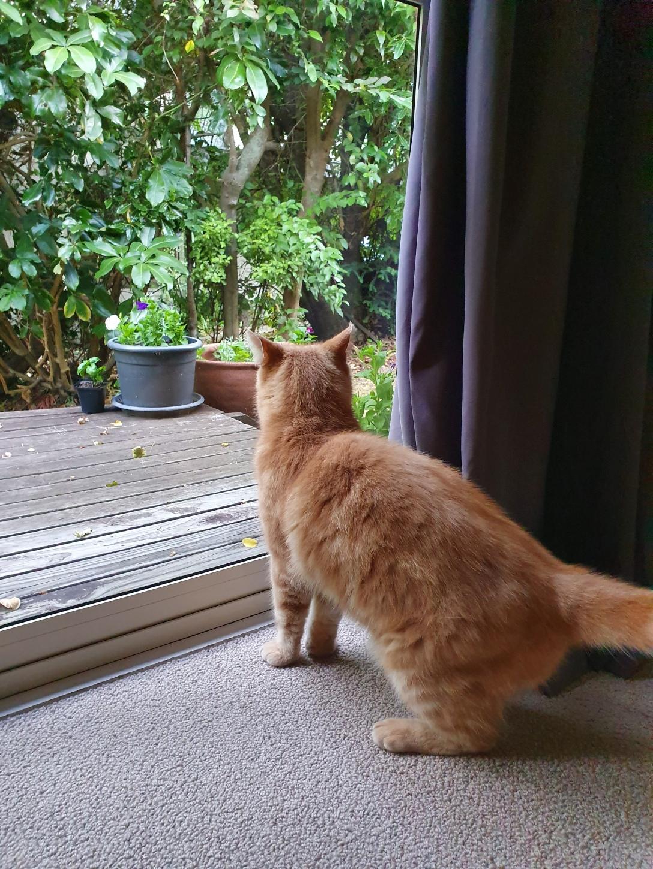 Weasley Looking for Meghan